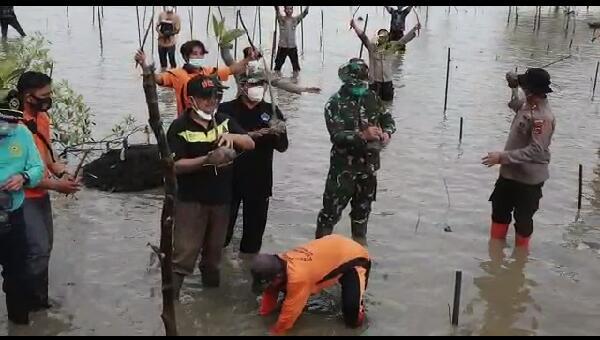 Bupati Anwar sadat Bersama Kapolres Dan Dandim 0419 Tanam Mangrove