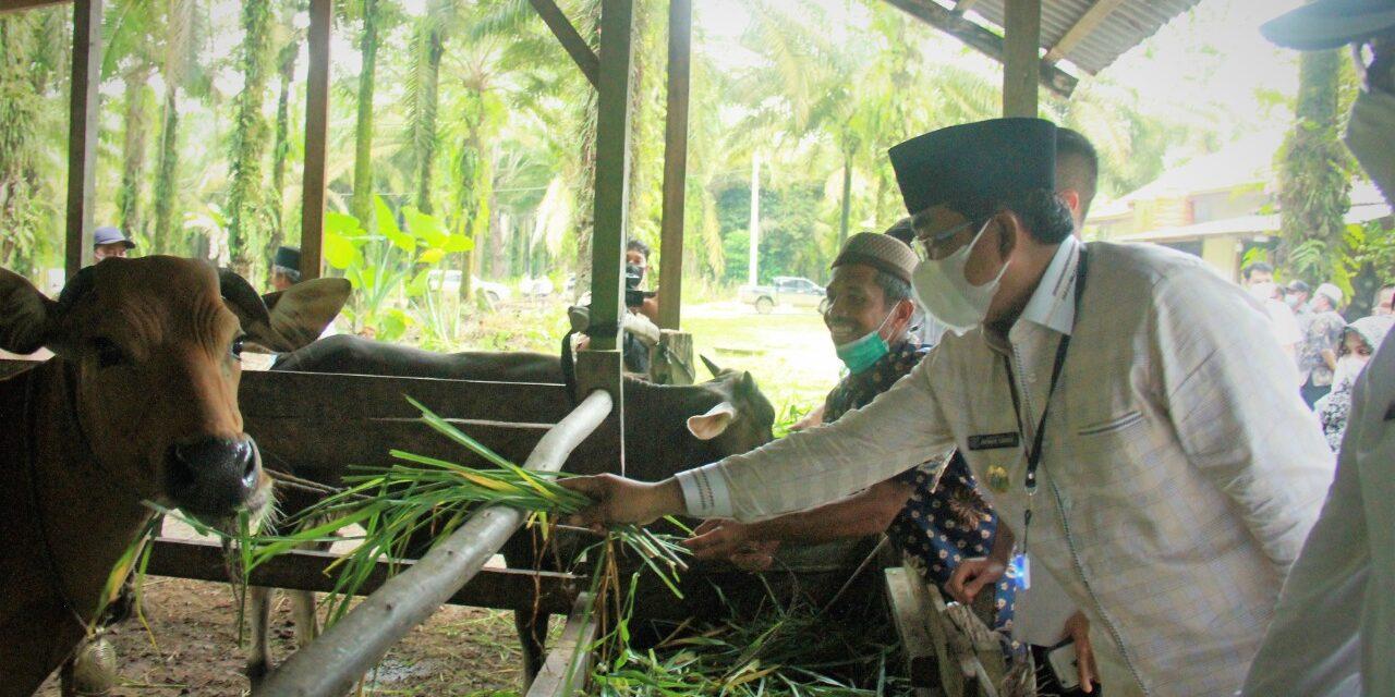 Bupati Tanjab Barat Tinjau Langsung Peternakan Sapi kelompok Tani Anggrek di Desa Adi Jaya